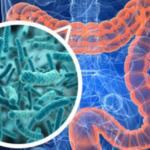 Bağırsak Bakterileri Bizi Daha Zeki Yapabilir Mi?